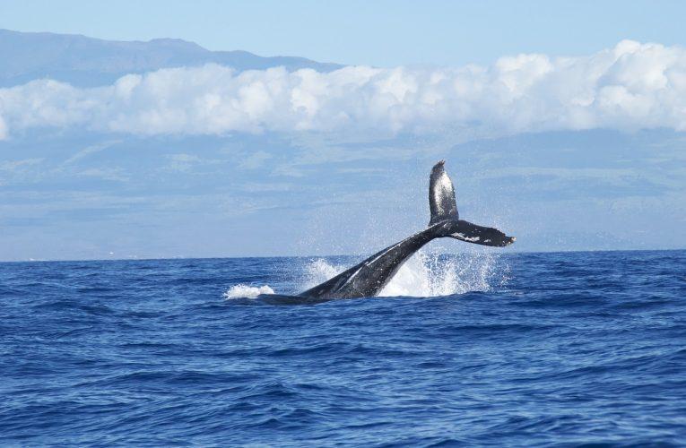 Attaque de baleines sur le Bitcoin : 12 millions d'euros de transactions BTC.