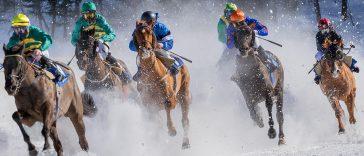 Le cheval NFT, un investissement possible - 2ème partie