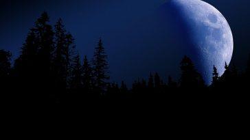 večer, souhrn, noc, měsíc, les